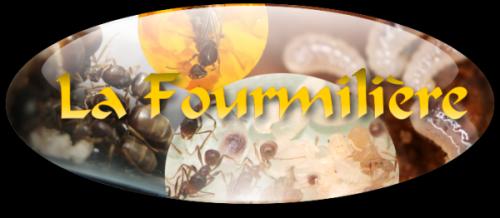 La fourmiliere