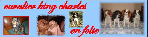 Cavalier King Charles En Folie