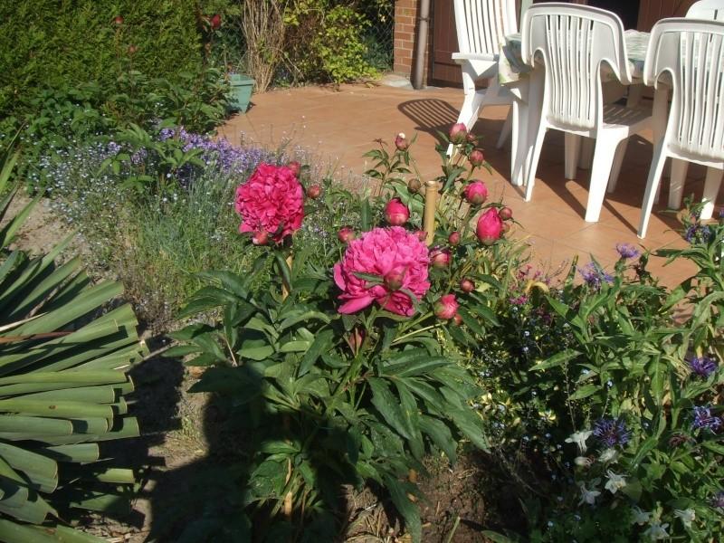 pivoine ne fleurit pas au jardin forum de jardinage. Black Bedroom Furniture Sets. Home Design Ideas