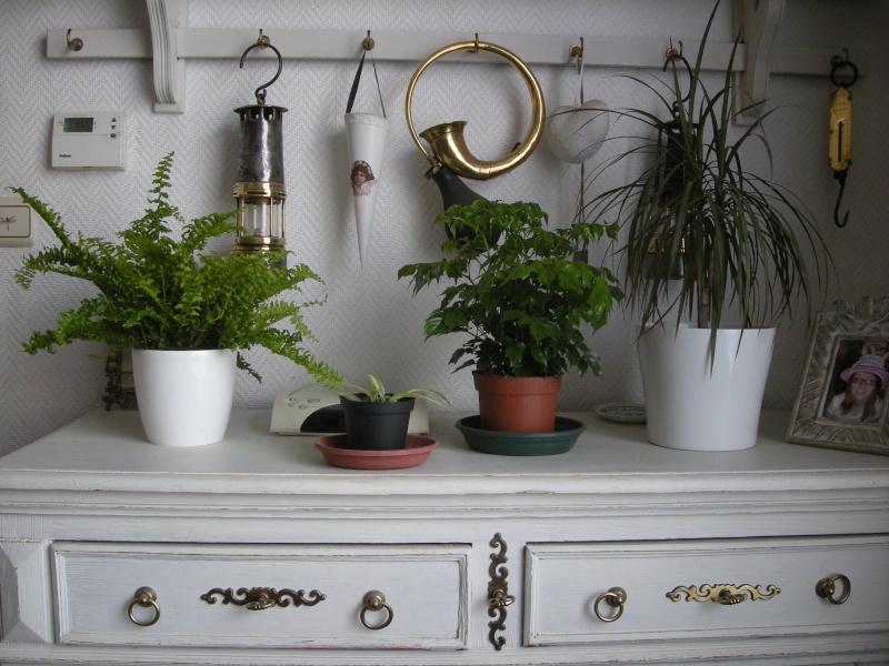 Mes plantes d 39 int rieur - Fougere de boston depolluante ...