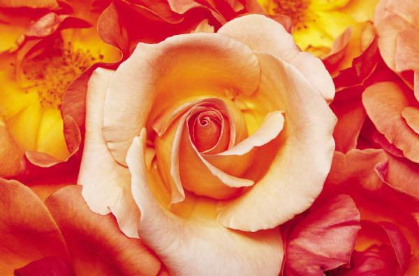 زهور أعجبتني 7d976f10.jpg