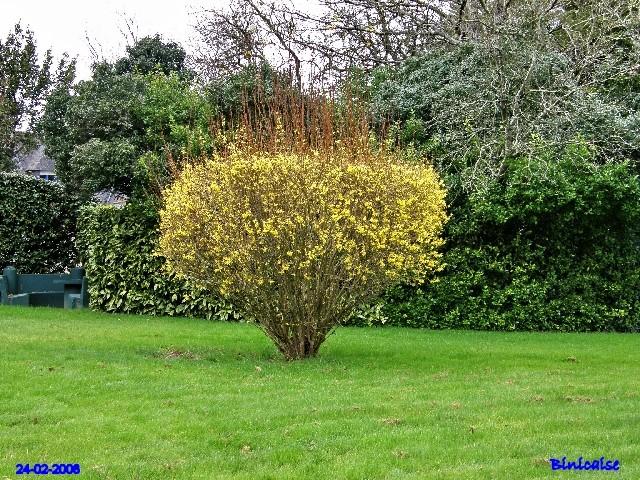 Scénes de jardin dans le parc. dans Fleurs et plantes p2243423