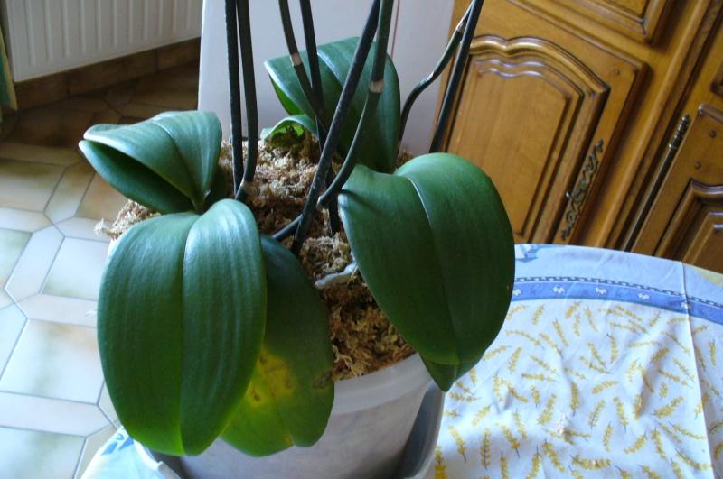 forums de jardinage • afficher le sujet - mon orchidée