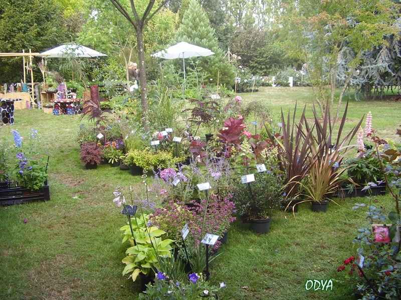 F te des plantes au jardin secret du grand boulay for Au jardin secret de tadine