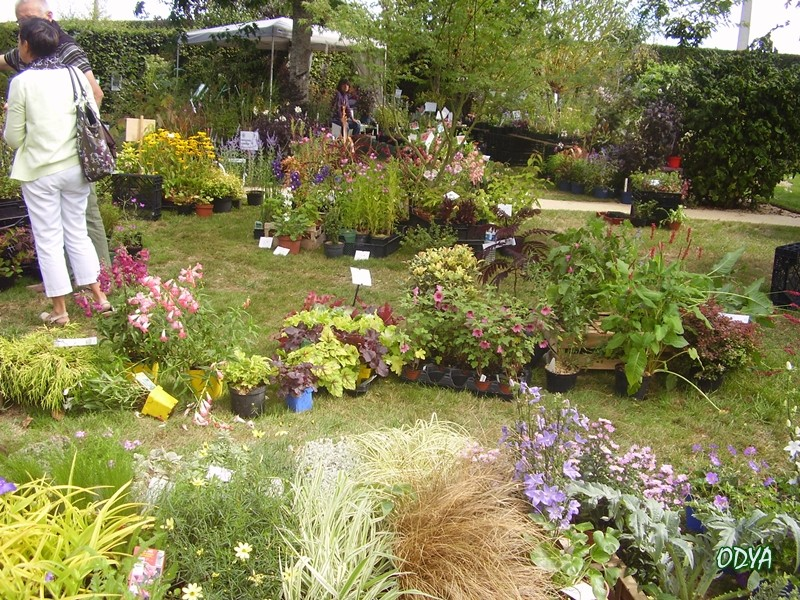 F te des plantes au jardin secret du grand boulay for Au jardin secret