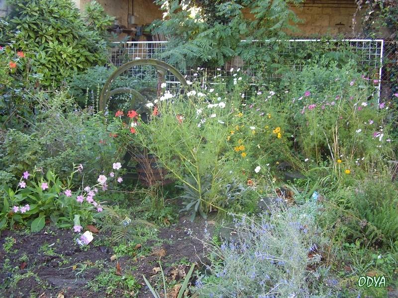 Recherche d 39 id es plantes hautes pour l 39 ombre for Recherche plante