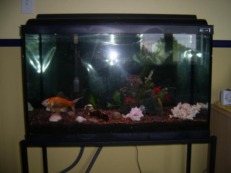 Besoin de votre avis sur poisson rouge standard dans un for Quoi mettre aquarium poisson rouge