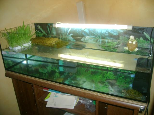 Aqua terrarium de rosas for Aquarium tortue aquatique
