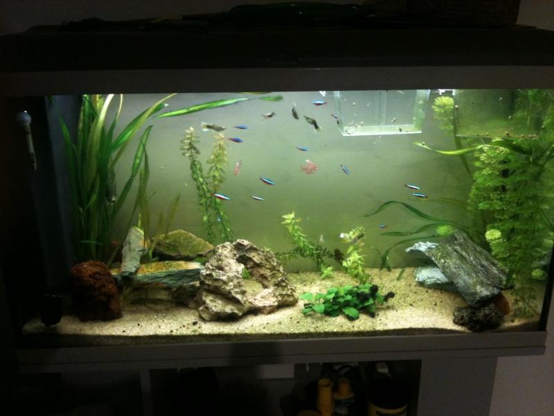 13 vend aquadisio 200l for Vend aquarium