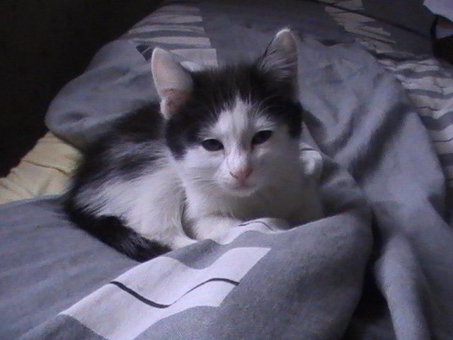 45 plusieur chaton de 2 mois donner rapidement sinon spa. Black Bedroom Furniture Sets. Home Design Ideas