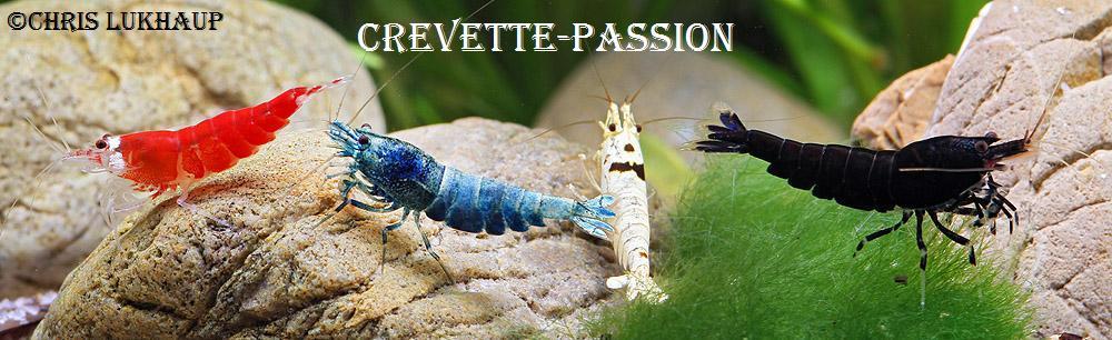 crevette-passion