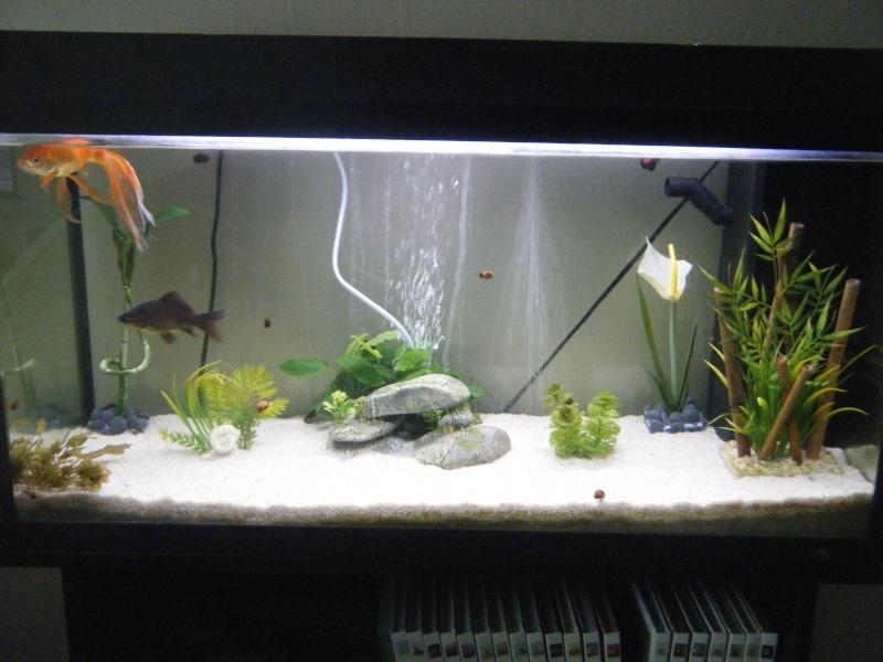 Mon poisson rouge est mort for Quoi mettre aquarium poisson rouge