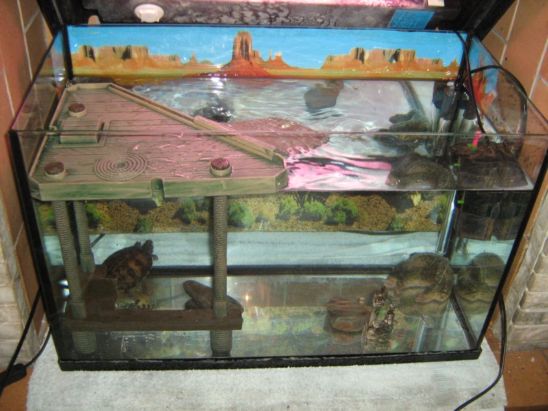 Mon aquarium pour mes tortues jonadu6200 for Aquarium tortue