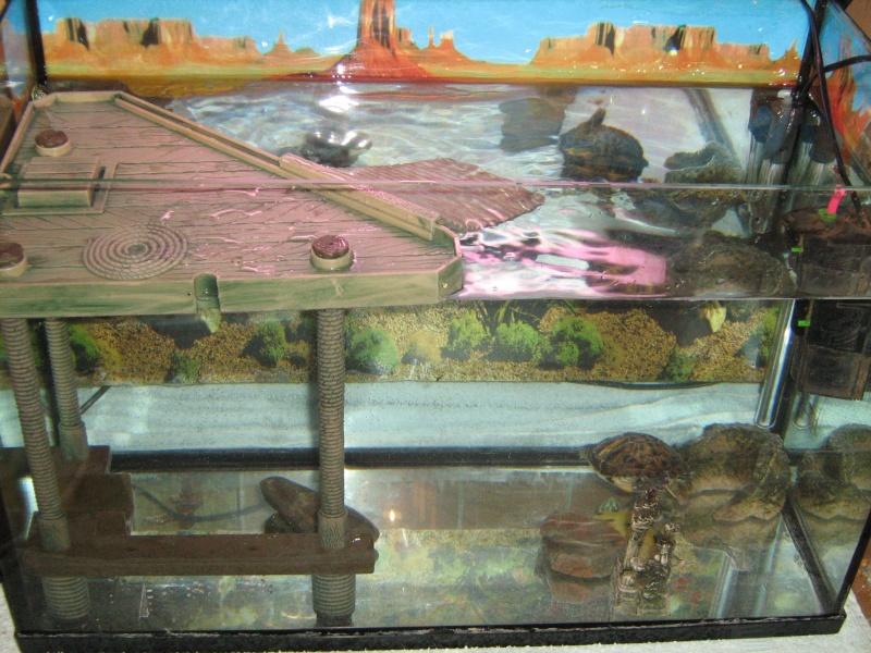 Mon aquarium pour mes tortues for Aquarium tortue aquatique