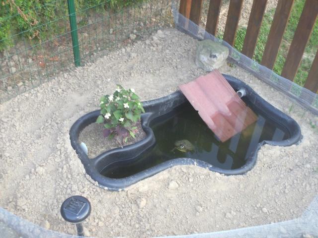 Notre bassin pour tortues page 3 for Bassin exterieur pour tortue de floride