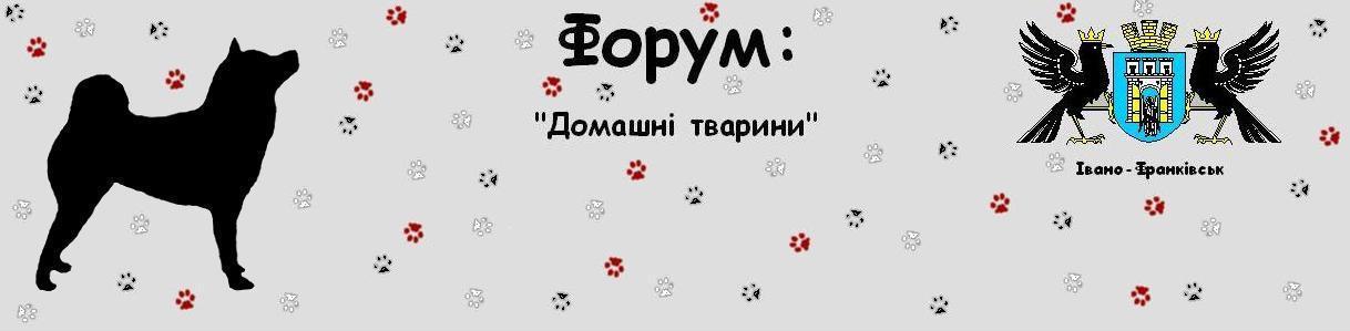 Форум ( Ивано-Франковск) : Домашние животные; Форум (Івано-Франківськ) Домашні тварини