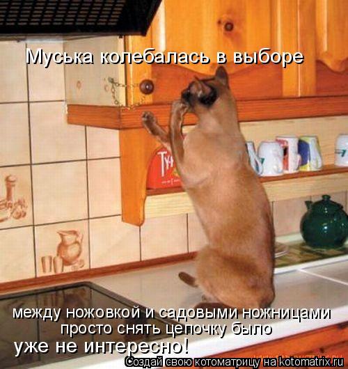 http://i27.servimg.com/u/f27/15/77/94/13/cat_ki10.jpg