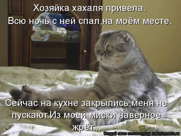 http://i27.servimg.com/u/f27/15/77/94/13/kotyca11.jpg