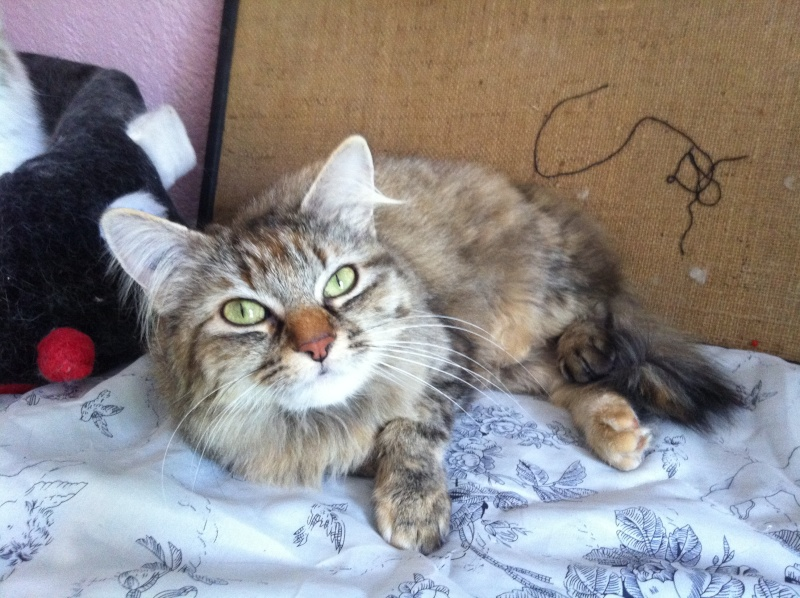 Chat sexe roanne