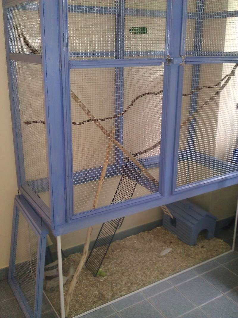 Nouvelle cage pour lila mon ecureuil de coree recherche - Amenager une cage d escalier ...