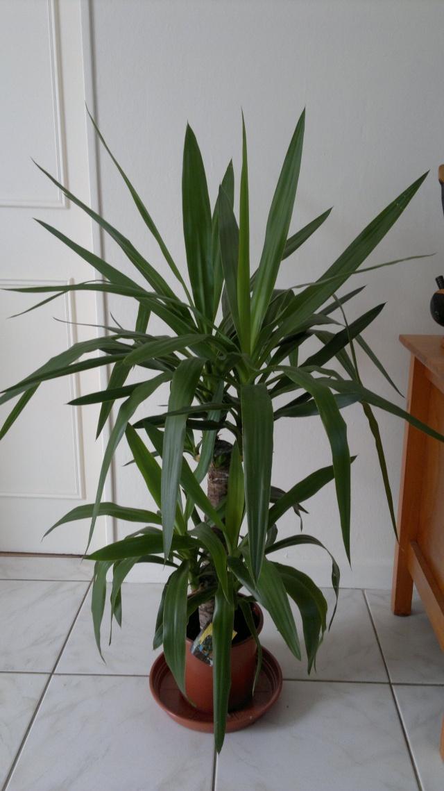 Quelle terre pour le yucca - Quelle terre pour hortensia ...