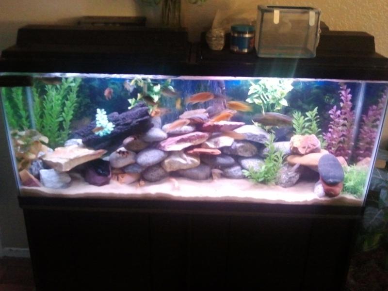 Freshwater fish tank maintenance 15 gallon 2017 fish for 55 gallon fish tank petsmart